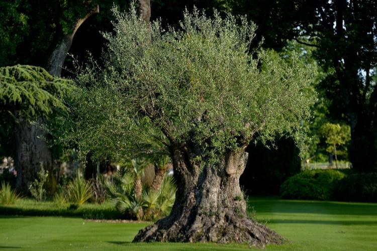 Visite du jardinier degustation de vin bordeaux for Louis jardin wine